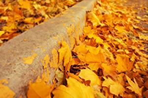 Обои Крупным планом Осень Листья Желтый Клён Природа картинки