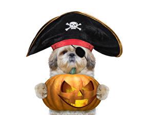 Картинки Собаки Хеллоуин Тыква Белый фон Щенок Шляпа Животные