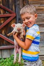 Картинка Домашняя свинья Детеныши Мальчики Улыбка Ребёнок