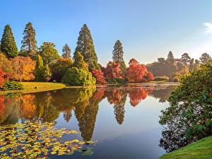 Обои Англия Осенние Парк Пруд Деревья Sheffield Park Природа