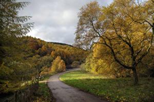 Фотографии Англия Осенние Дороги Деревья Fernilee Природа