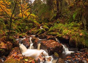 Фотографии Англия Леса Водопады Осенние Камень Листва Мха Sheffield South Yorkshire Природа