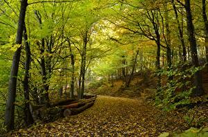Фото Леса Осенние Дороги Деревья Листья Природа