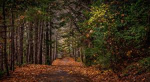 Фотография Леса Осень Деревья Листва