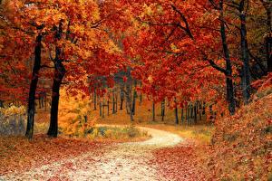 Картинка Леса Дороги Осень Деревья Листья Природа