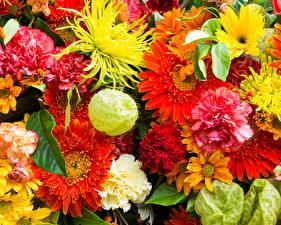 Фотография Герберы Гвоздика Хризантемы Крупным планом Цветы