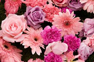 Обои Герберы Розы Гвоздика Крупным планом цветок