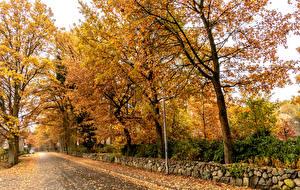 Фотографии Германия Осенние Дороги Деревья Листья Brocken station Lower Saxony Природа
