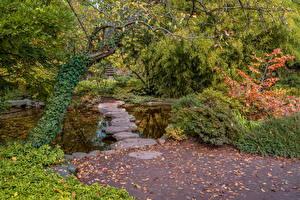 Фото Германия Парки Осень Камень Пруд Кусты Деревья Karlsruhe