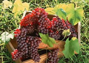 Картинка Виноград Вблизи Листья Пища