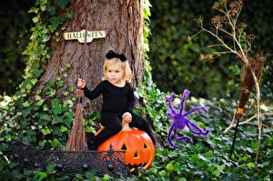 Фотографии Хеллоуин Тыква Пауки Девочки Сидящие Ребёнок