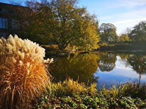 Фотография Гамбург Германия Парки Пруд Осенние Деревья