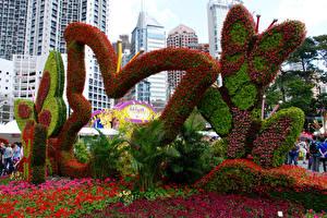 Фото Гонконг Парки Бабочки Дизайна Victoria Park Природа