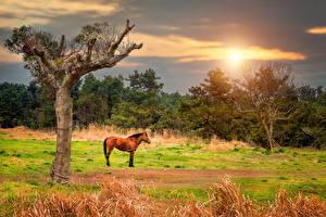 Картинка Лошади Луга Деревья Животные