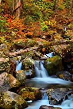 Обои Япония Парки Камни Осень Мхом Ручеек Kongorinji Temple Shiga Природа