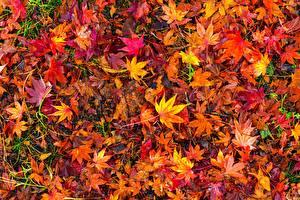 Фото Много Осенние Листва Разноцветные
