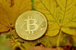 Фотографии Деньги Bitcoin Монеты Вблизи Листья