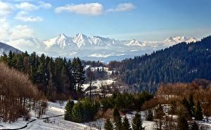 Фотографии Горы Леса Зима Пейзаж Снегу Природа