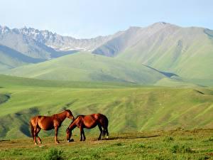 Картинки Горы Лошади Альп Двое Траве Холмов Животные