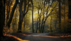 Обои Нидерланды Леса Осенние Дороги Деревья Природа