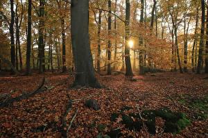 Обои Нидерланды Парки Осенние Деревья Листья Лучи света Мох Het Lankheet Природа