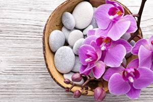 Фотография Орхидеи Камни Розовый Цветы