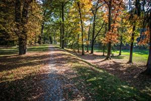 Фотография Парки Осень Деревья Листья Тропа Природа