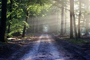 Обои Дороги Леса Лучи света Деревья Природа