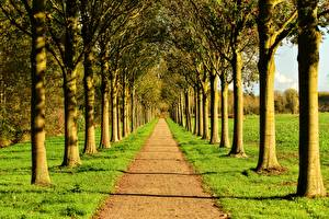 Картинки Дороги Лето Аллеи Траве Деревьев Природа
