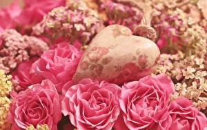 Картинка Розы Вблизи Розовый Лепестки Сердечко Цветы