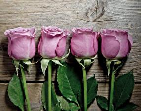 Картинка Розы Вблизи Доски Фиолетовый Цветы