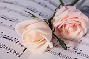 Фото Розы Ноты Двое Розовых Цветы
