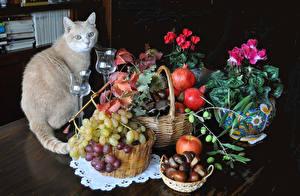 Фото Натюрморт Кошки Бегония Гранат Виноград Яблоки Ваза Корзина Бокалы Пища Животные