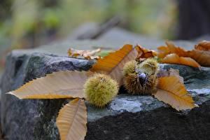 Обои Камень Каштан Осень Вблизи Листья Природа