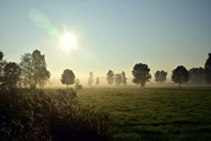 Картинка Рассветы и закаты Луга Трава Деревья Туман Солнце Природа