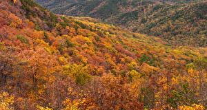 Фотография США Осень Леса Деревья Murray Georgia Природа