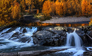 Фотография Штаты Осень Леса Водопады Бревна Middle Fork River Природа