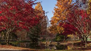 Фотографии Штаты Осенние Сады Пруд Деревья Gibbs Gardens Природа