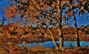 Обои Штаты Осенние Озеро Деревья Maryland Cash Lake Природа