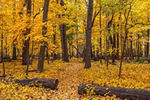 Фотографии Америка Осень Парки Чикаго город Дерева Лист Бревно Природа
