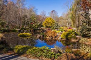 Фотографии Штаты Сады Осенние Пруд Кусты Деревья Gibbs Gardens