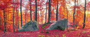 Картинка Украина Осень Леса Камень Закарпатье Деревья Листья Мха Природа