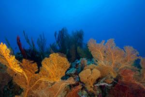 Фото Подводный мир Кораллы Животные