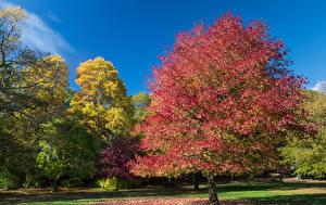 Фото Великобритания Осенние Сады Деревья Clyne Gardens Swansea