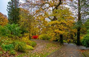 Картинки Великобритания Осенние Парк Деревья Листья Кусты Clyne Gardens Природа