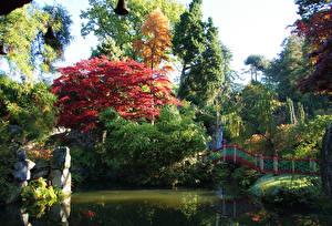 Фотография Великобритания Сады Пруд Осень Мосты Деревья Biddulph Grange Garden Природа