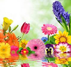 Картинка Вода Герберы Тюльпаны Гиацинты Фиалки