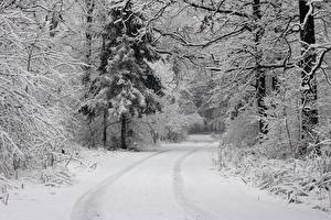 Фото Зимние Леса Дороги Снег Деревья Природа