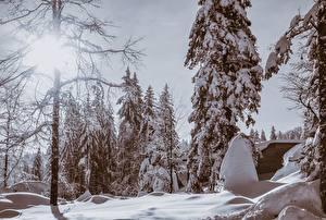Картинка Зимние Леса Снег Деревья Природа