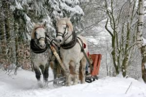 Фотографии Зимние Лошади Снег Деревья 2 Животные
